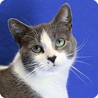 Adopt A Pet :: Ellie - Winston-Salem, NC