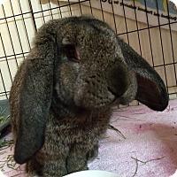Adopt A Pet :: Gentle Ben - Moneta, VA