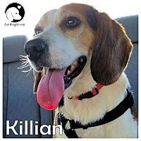 Adopt A Pet :: Killian - Novi, MI