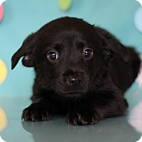 Adopt A Pet :: Ranch - Waldorf, MD