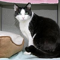 Adopt A Pet :: Caesar - Stamford, CT