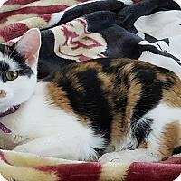 Adopt A Pet :: Pickles - Garner, NC