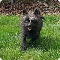 Adopt A Pet :: CHEECH - Smithfield, PA