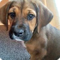 Adopt A Pet :: Armani - Kimberton, PA