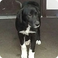 Adopt A Pet :: Hazel (has been adopted) - Trenton, NJ