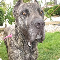 Adopt A Pet :: ROCKO-Very special big boy - Bainbridge Island, WA
