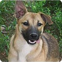 Adopt A Pet :: Princess - Harrisburgh, PA