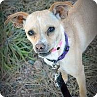 Adopt A Pet :: Taz - Cheyenne, WY