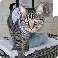 Adopt A Pet :: Alexander(Xander) - Scottsdale, AZ