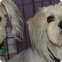 Adopt A Pet :: Huck and Augie - Scottsdale, AZ