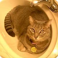 Adopt A Pet :: Matza - North Highlands, CA