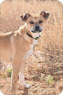 Shepherd (Unknown Type) Mix Dog for adoption in Midland, Texas - Art