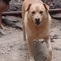 Shepherd (Unknown Type) Mix Dog for adoption in Centerville, Tennessee - Frisky