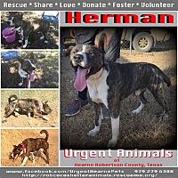 Adopt A Pet :: Herman - Hearne, TX