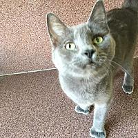 Adopt A Pet :: Vera - Sunny Isles Beach, FL