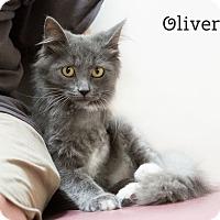 Adopt A Pet :: Oliver - Phoenix, AZ