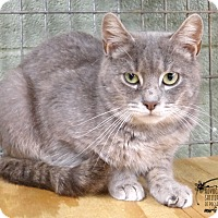 Adopt A Pet :: Opal - Marlinton, WV