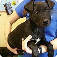 Adopt A Pet :: Newt - Sparta, NJ