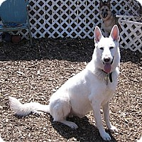 Adopt A Pet :: Ruger - Evergreen Park, IL