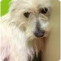 Adopt A Pet :: Archer - pasadena, CA