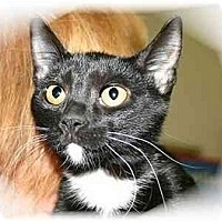 Adopt A Pet :: Angelicka - Montgomery, IL