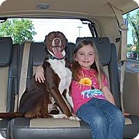 Adopt A Pet :: Jasmine - Windham, NH