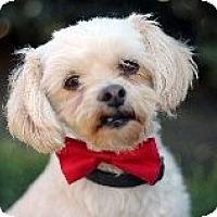 Adopt A Pet :: Schnapps - Atascadero, CA