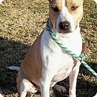 Adopt A Pet :: JACKMON-Courtesy Posting - Glastonbury, CT