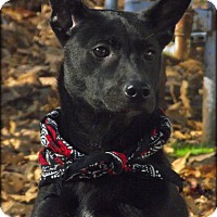 Adopt A Pet :: Halli - Brattleboro, VT