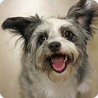 Adopt A Pet :: River - Canoga Park, CA