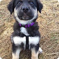 Adopt A Pet :: Zoe - Pitt Meadows, BC