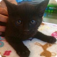 Adopt A Pet :: Pax - Los Angeles, CA