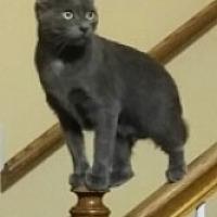 Adopt A Pet :: Lil Bit - Nashville, TN