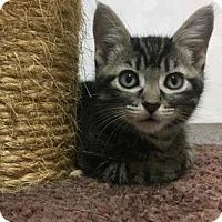 Adopt A Pet :: Porche - Wichita, KS