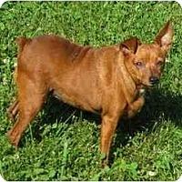 Adopt A Pet :: Penni - Nashville, TN