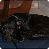 Adopt A Pet :: Rae - Seattle, WA