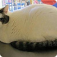 Adopt A Pet :: Jellybean - Albany, NY