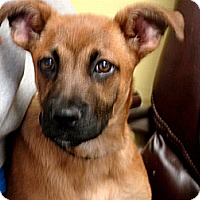 Adopt A Pet :: SERENITY - Henderson, KY