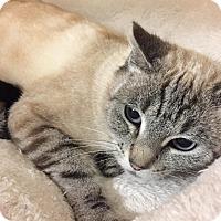 Adopt A Pet :: BARBIE - Diamond Bar, CA