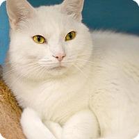 Adopt A Pet :: Troy - Byron Center, MI