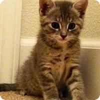 Adopt A Pet :: Keiko - North Highlands, CA