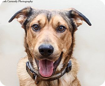 Retriever (Unknown Type) Mix Dog for adoption in Jacksonville, North Carolina - Captain