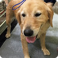 Adopt A Pet :: Lizzy - BIRMINGHAM, AL