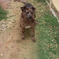 Adopt A Pet :: Sugar - Marianna, FL