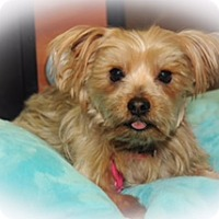 Adopt A Pet :: Ibis - N. Babylon, NY