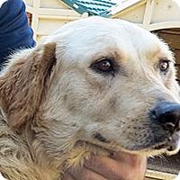 Adopt A Pet :: T4 Venus - BIRMINGHAM, AL