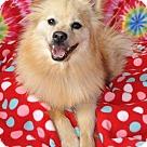 Adopt A Pet :: Sambuca