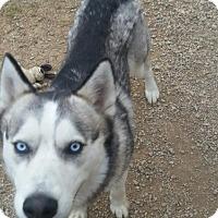 Adopt A Pet :: Cherokee - Richland Hills, TX