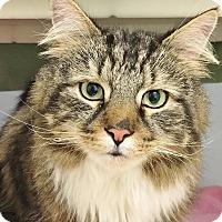 Adopt A Pet :: Bolt - Salisbury, MA