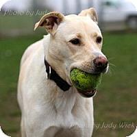 Adopt A Pet :: WIllow - Minnetonka, MN